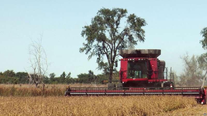 南達科他州的一個農戶在收割大豆。(美聯社)