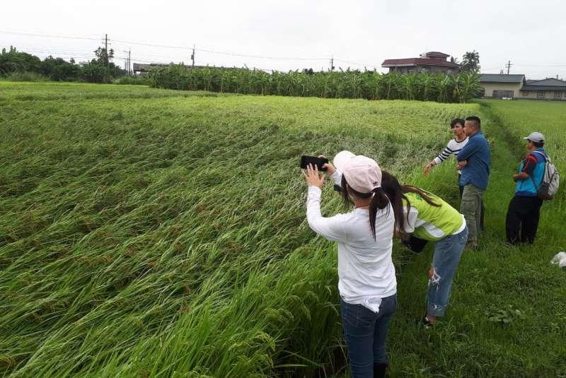 高市府農業局第一時間即組成勘災小組前往產區確認農損。(圖/徐炳文攝)