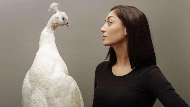 凱耶製作了這隻白孔雀標本,它因感染而死。(BBC中文網)