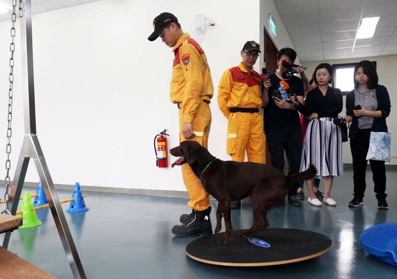 20190617-台北市消防局搜救隊暨搜救犬訓練基地今天正式落成,未來台北市搜救犬將有更完善、獨立的住訓空間。圖為搜救犬訓練以及和領犬員互動情況。(蘇仲泓攝)