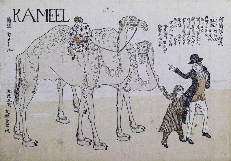 19世紀《阿蘭陀人持駱駝渡來》長崎版畫,畫的是長崎在16世紀時,荷蘭人運來一對波斯產的單峰駱駝。(圖/故宮博物院提供)