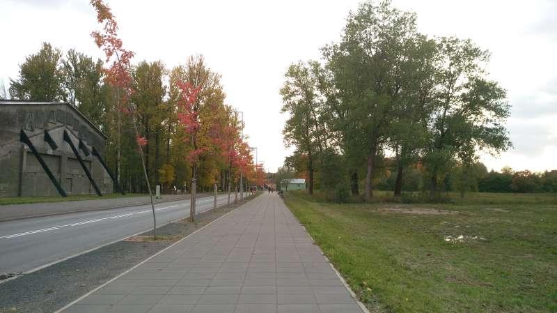 塔圖之秋-紅黃綠葉搶繽紛。(圖/謝幸吟提供)