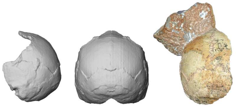 2019年7月10日發表在「自然」期刊的最新研究指出,一支跨國研究團隊運用先進電腦模擬技術及鈾定年法,重新檢測1970年代在希臘阿比笛瑪洞穴出土的兩塊頭骨化石。(AP)