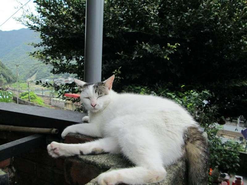 午後猴硐的貓咪悠閒地曬太陽(圖/蔡佳妘攝)