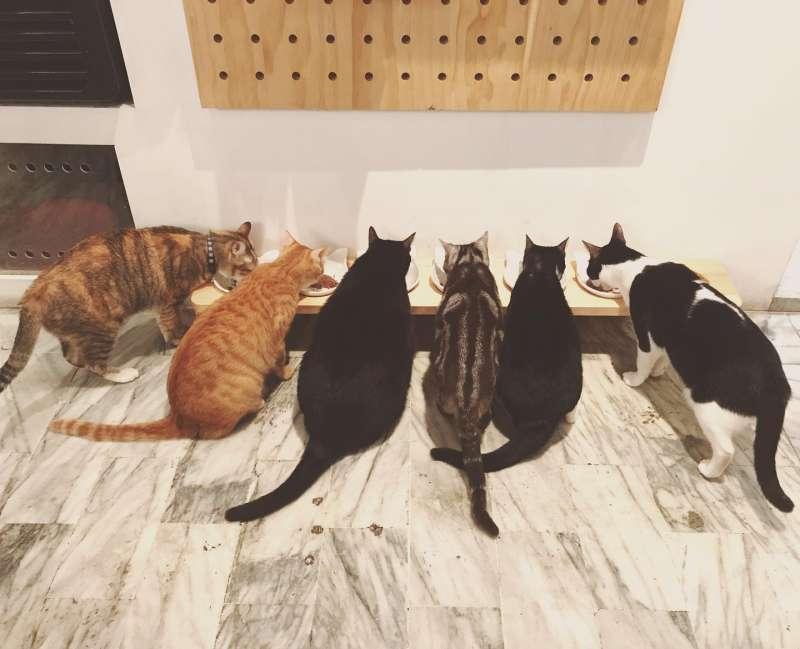外帶一隻貓的所有貓店員(圖/外帶一隻貓粉絲專頁)
