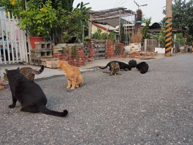 台南貓村的貓咪都不怕人(圖/台南市政府影視支援中心)