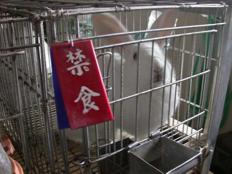 進行熱源實驗前需禁食的白兔(取自動物社會研究會).jpg