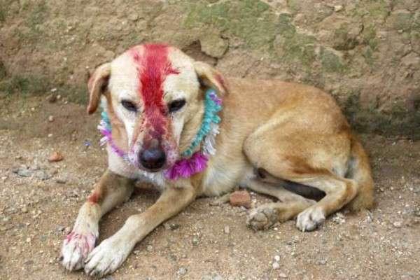 這些被「逼婚」的動物們才是最無辜、最可憐的,有人有想過這些動物的心情嗎?(圖片擷取自Youtube)