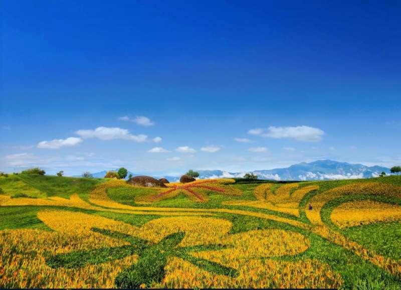 預估8月中旬之後,赤科三巨石旁盛開的金針花海圖騰,是2019年最具看頭的賞花景點。(圖/玉溪地區農會提供)