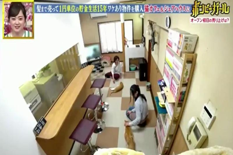 咲所開設的貓咪咖啡廳(圖/取自網路)