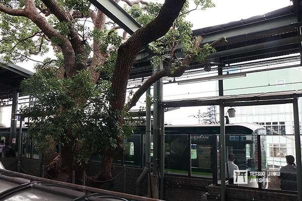 萱島站的月台上,長有大樹。(圖/陳威臣)