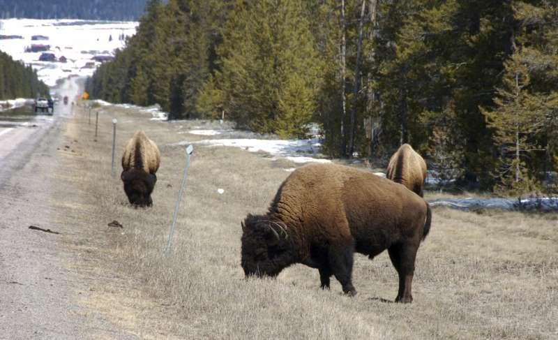 《瀕危物種保護法》修法將在下個月上路,許多非營利環境動物保育組織均表態會阻擋法案上路。