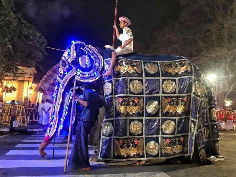 斯里蘭卡70歲大象蒂奇莉(Tikiri)疑遭虐待,皮包骨仍要載人遊行。已被泰國拯救大象基金會救出。(取自Lek Chailert臉書)