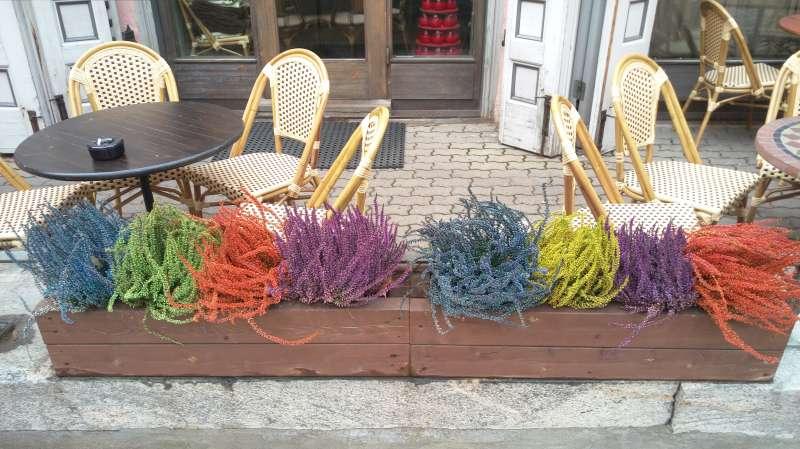 塔林老城1街角的彩色植物。(圖/謝幸吟提供)