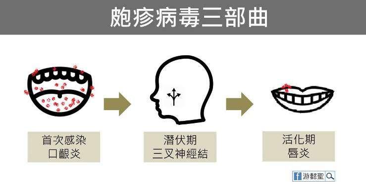 (圖/照護線上)