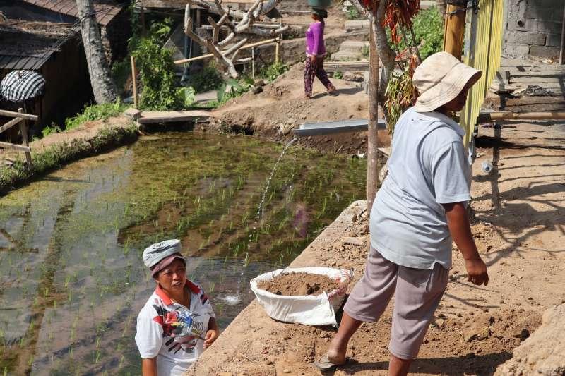 峇里島「德哥拉朗梯田」的蘇巴克灌溉系統是當地農夫千年來賴以維生的重要水利設施。(蔡娪嫣攝)