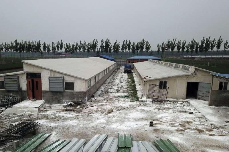 非洲豬瘟疫情難控制,中國豬隻數量已減少1/3。圖為河北一家養豬戶四周灑滿白色消毒粉末。(AP)