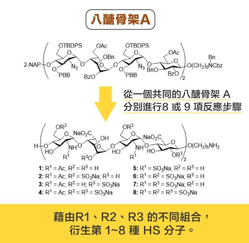 從一個共同的八醣骨架 A ,分別進行 8或 9 項反應步驟,可以衍生出 8 種 HS 分子。(圖說設計/黃曉君、林洵安)