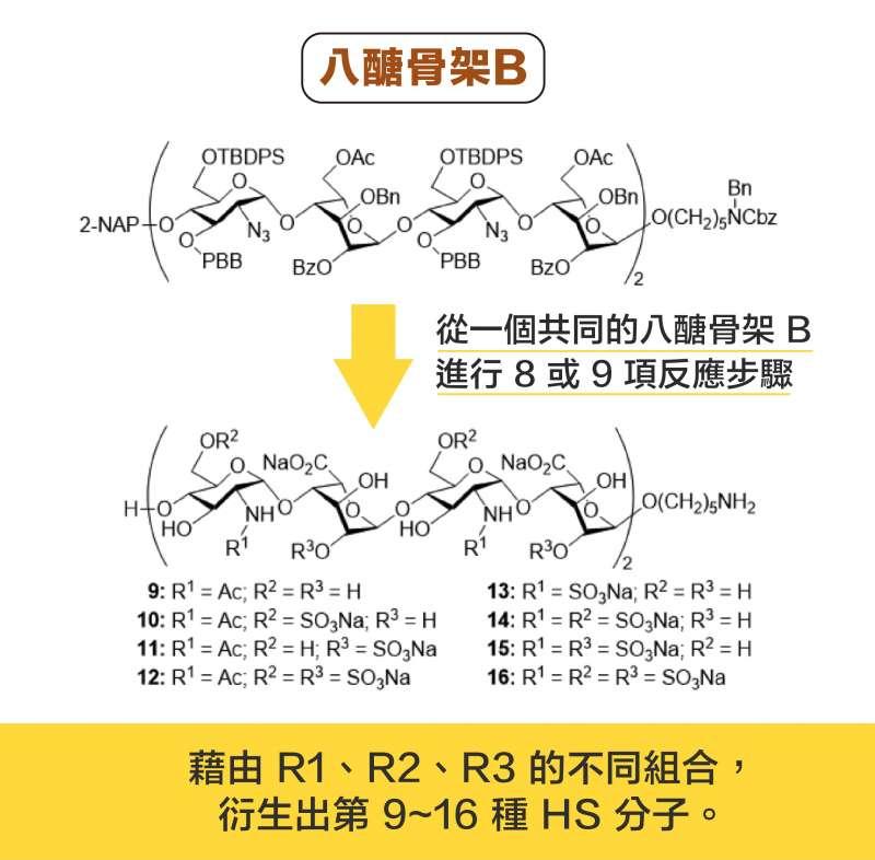 從一個共同的八醣骨架 B ,分別進行 8或 9 項反應步驟,可以衍生出 8 種 HS 分子。(圖說設計/黃曉君、林洵安)