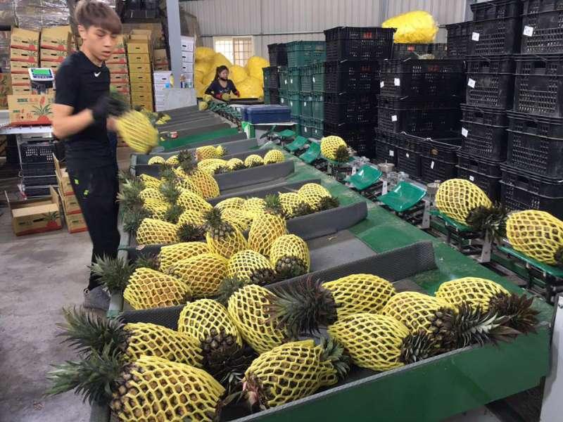 鳳梨是高雄外銷量最多的水果。(翻攝自吳芳銘臉書)