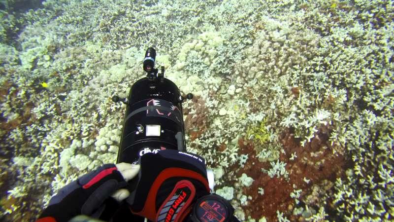 2015年白化事件後,科學家開始透過高科技設備監測珊瑚。(AP)