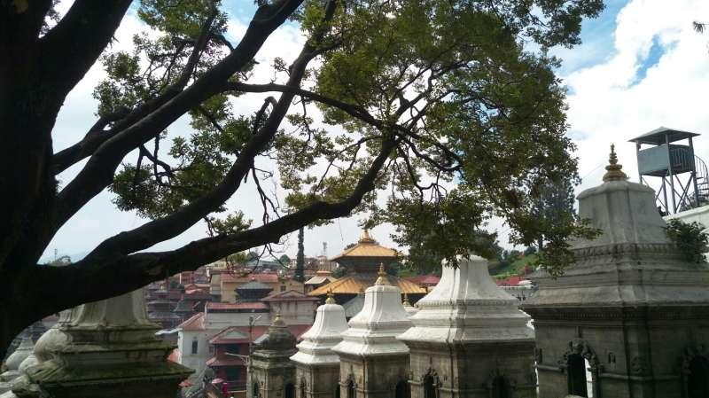 帕蘇帕提那神廟,陽光穿過樹梢。(圖/謝幸吟)