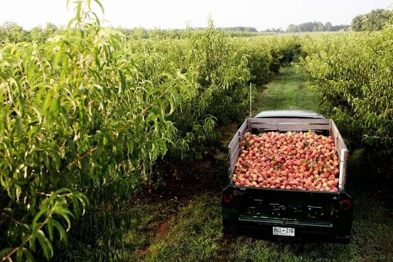 03(圖/The Peach Truck Facebook)