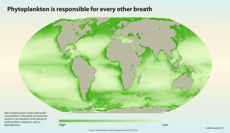浮游生物關乎地球上所有生命的氧氣來源。圖為全球海域的葉綠素濃度分布,(圖/聯合國環境規劃署GRID-Arendal)