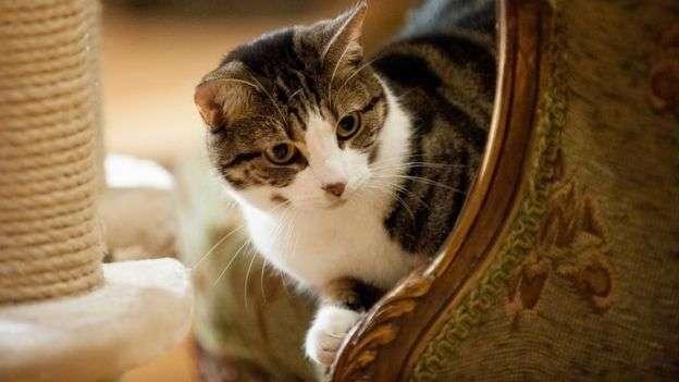 貓咪咖啡館風行世界各地。(BBC中文網)