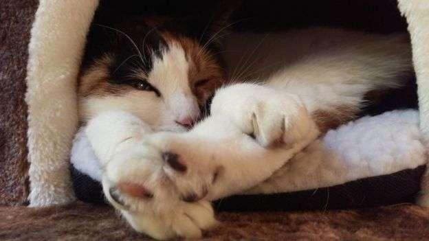 貓咪一天要睡16個小時。(BBC中文網)