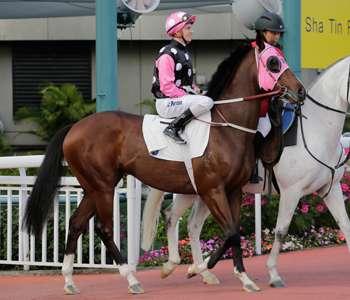 「美麗傳承」是近來多次稱霸香港賽馬的名駒,但正因最為熱門,勝出的賠率反而最小,投資亦應如是想!(圖片來源:香港賽馬會)