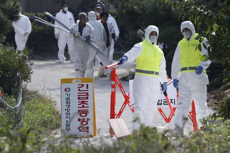2019年,南韓出現養豬場豬隻與野豬感染非洲豬瘟,當局如臨大敵(AP)