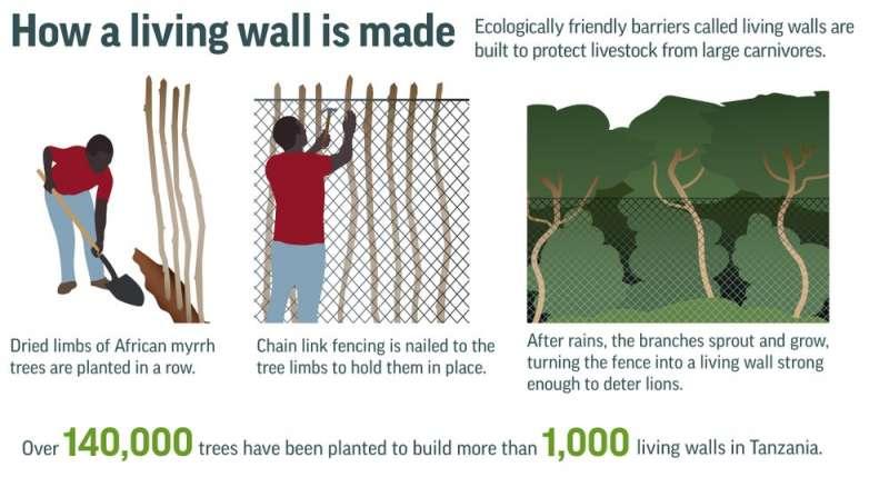 非洲新式畜欄搭建方法示意圖。(AP)