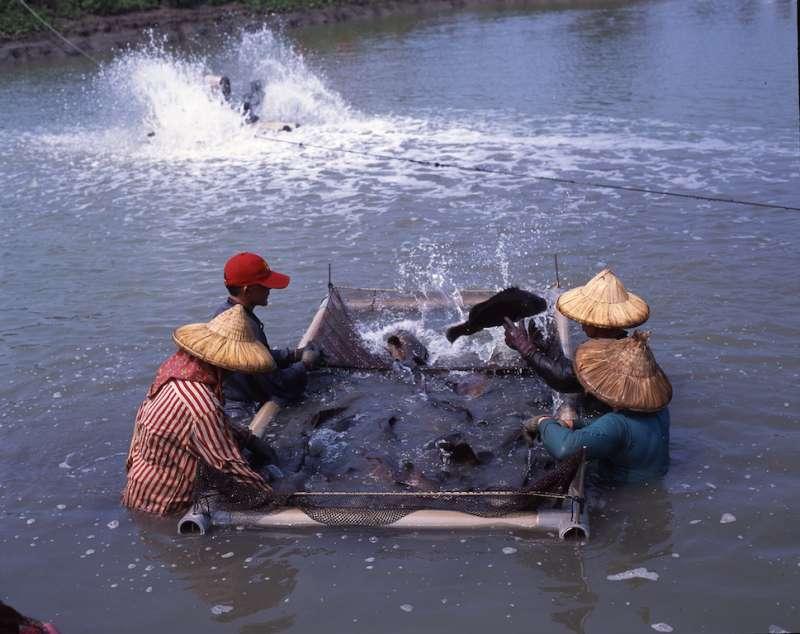 實現水資源及冷能再利用,鑽石水與石斑魚共生共好。(圖/台灣中油公司提供)