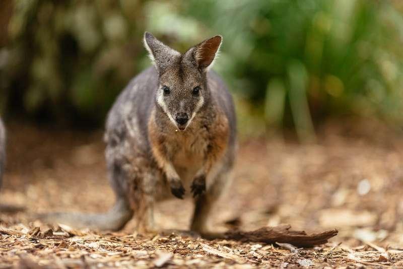 旅客可在舒適的環境下體驗澳洲的野生生態。(圖/DECO TV)