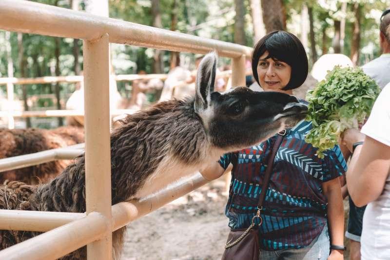 如果到能近距離與動物互動的動物園,香水的某些氣味可能會使動物發狂。(圖/unsplash)