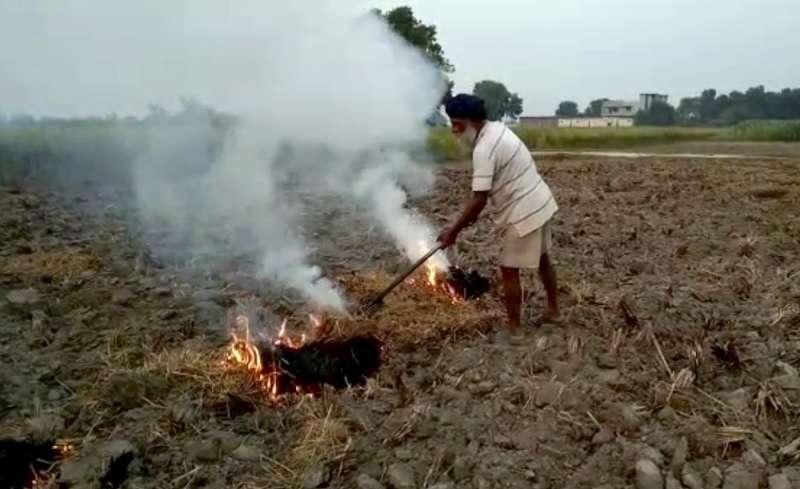 印度北部農民因沒錢租用機械,鋌而走險用原始火燒方式焚燒殘梗。(AP)