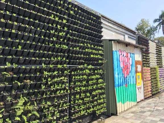旗山糖廠社區 打造可食地景植生綠牆用於社區共餐 減少食材運送所造成的碳排放。(圖/徐炳文攝)