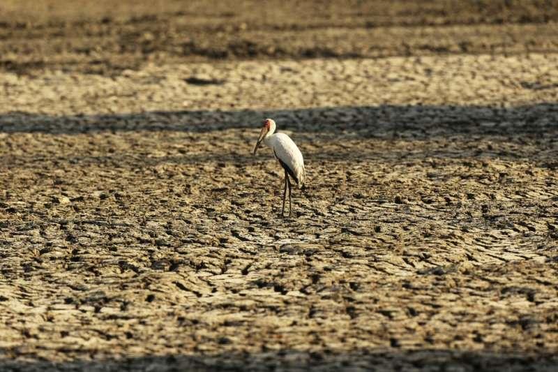 由於氣候變遷,辛巴威陷入乾旱危機。(AP)