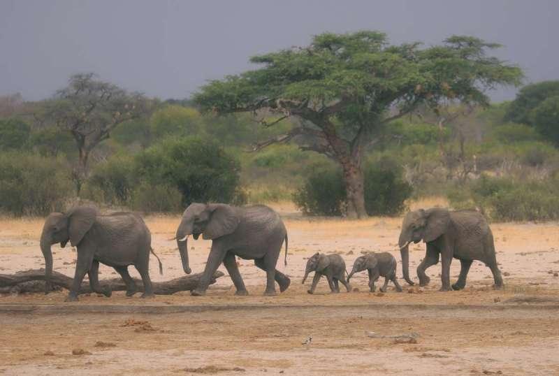 辛巴威萬基國家公園是著名觀象景點。(AP)
