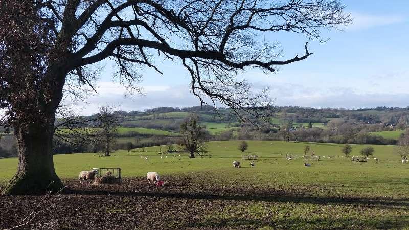 英國赫里福德郡(Herefordshire)以其畜牧業及釀蘋果酒聞名。(圖/取自Wikimedia)