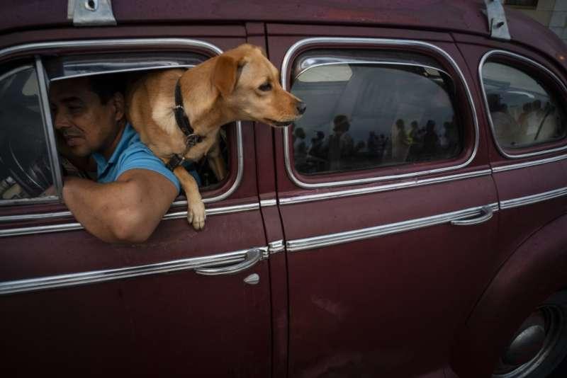 狗狗是人類的最佳夥伴,生活環境和基因相似度高,科學家開始從狗狗身上研究衰老和抗老的秘密。(AP)