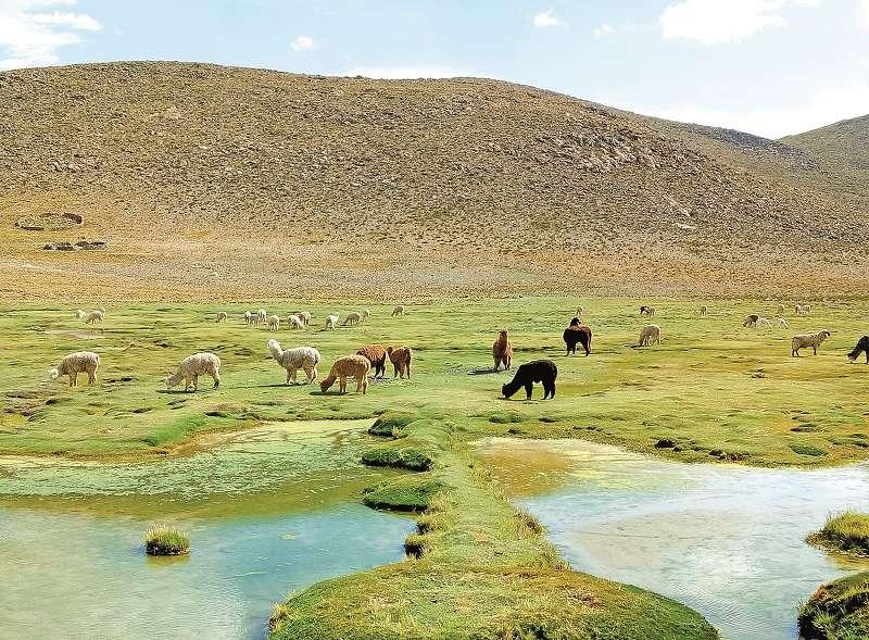 羊駝保護區。(圖/玉山社提供)
