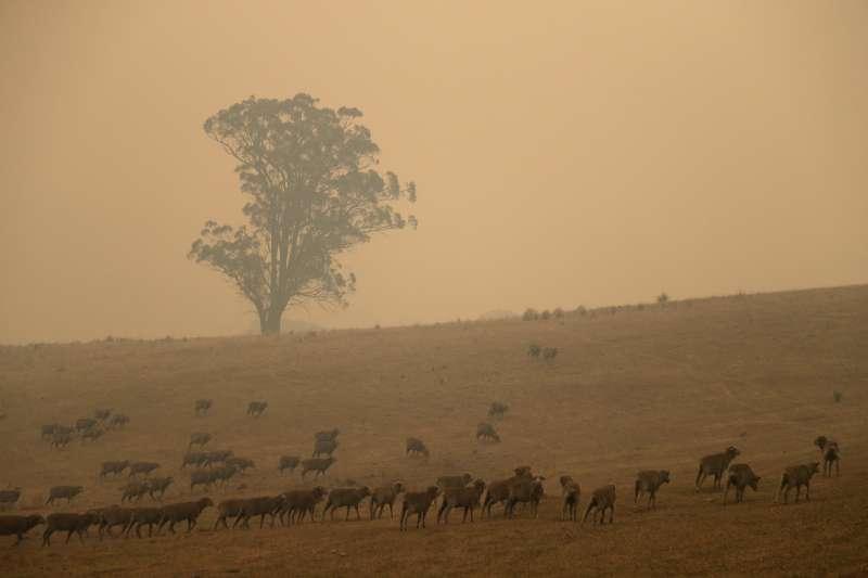 澳洲野火綿連數月,所形成的煙霧更飄散至全世界。(AP)