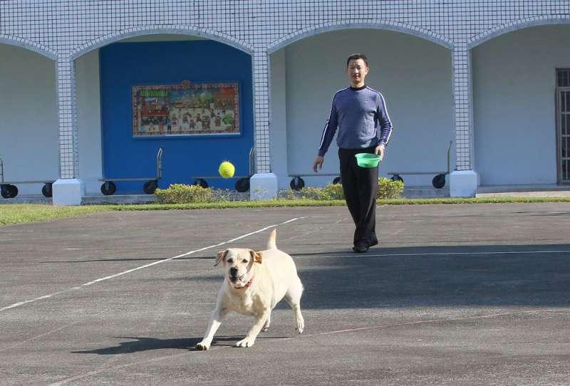 陪伴犬麗茲「下班」後,最大的娛樂是玩網球。(柯承惠攝)