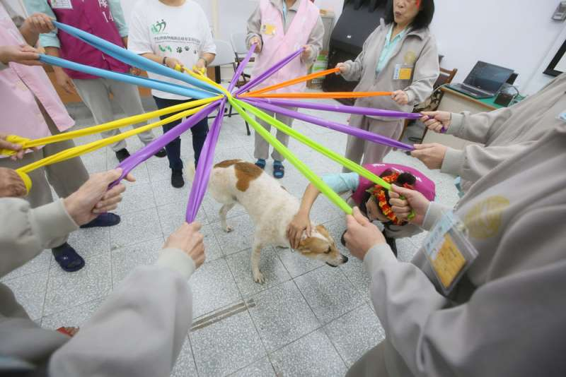 在動物治療專家的引導下,原本神情畏縮的學員透過遊戲漸漸與狗兒開心互動。(柯承惠攝)