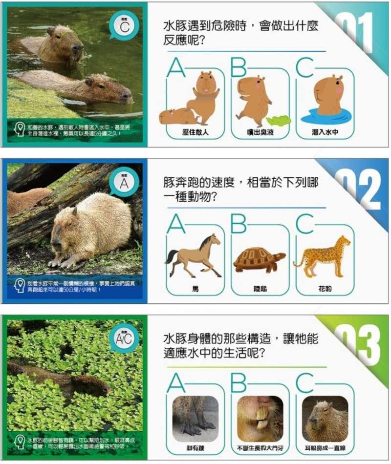 水豚(台北市立動物園)