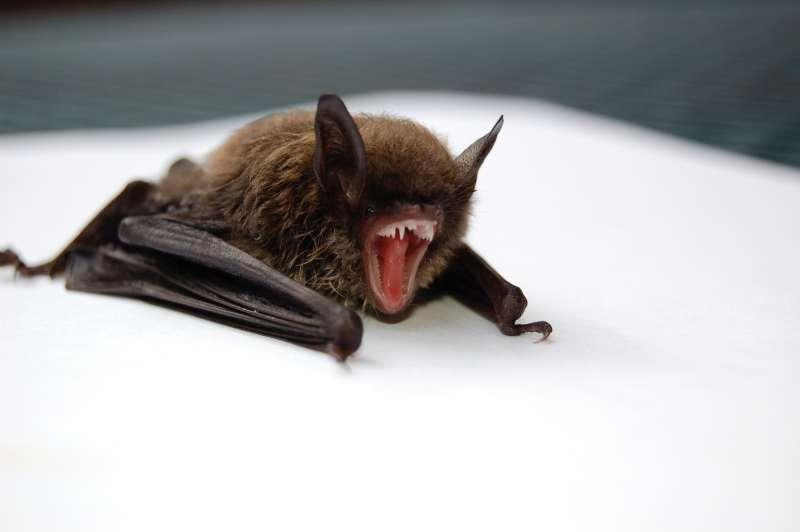 蝙蝠(圖/Unsplash)