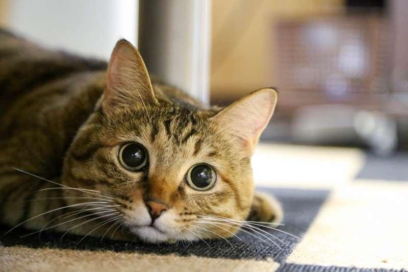 根據研究顯示,貓很可能根本不在乎飼主的長相。(圖/photo-ac)