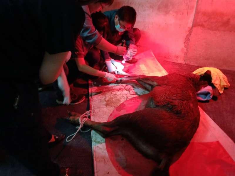 私設獸鋏獵捕野生動物,最高可處5年有期徒刑。(圖/徐炳文攝)